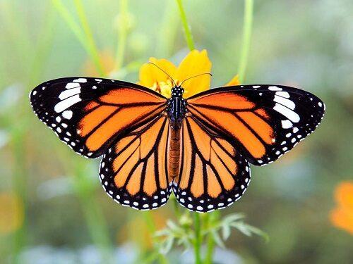 Little Haven Gratitude Walk Butterflies Forever